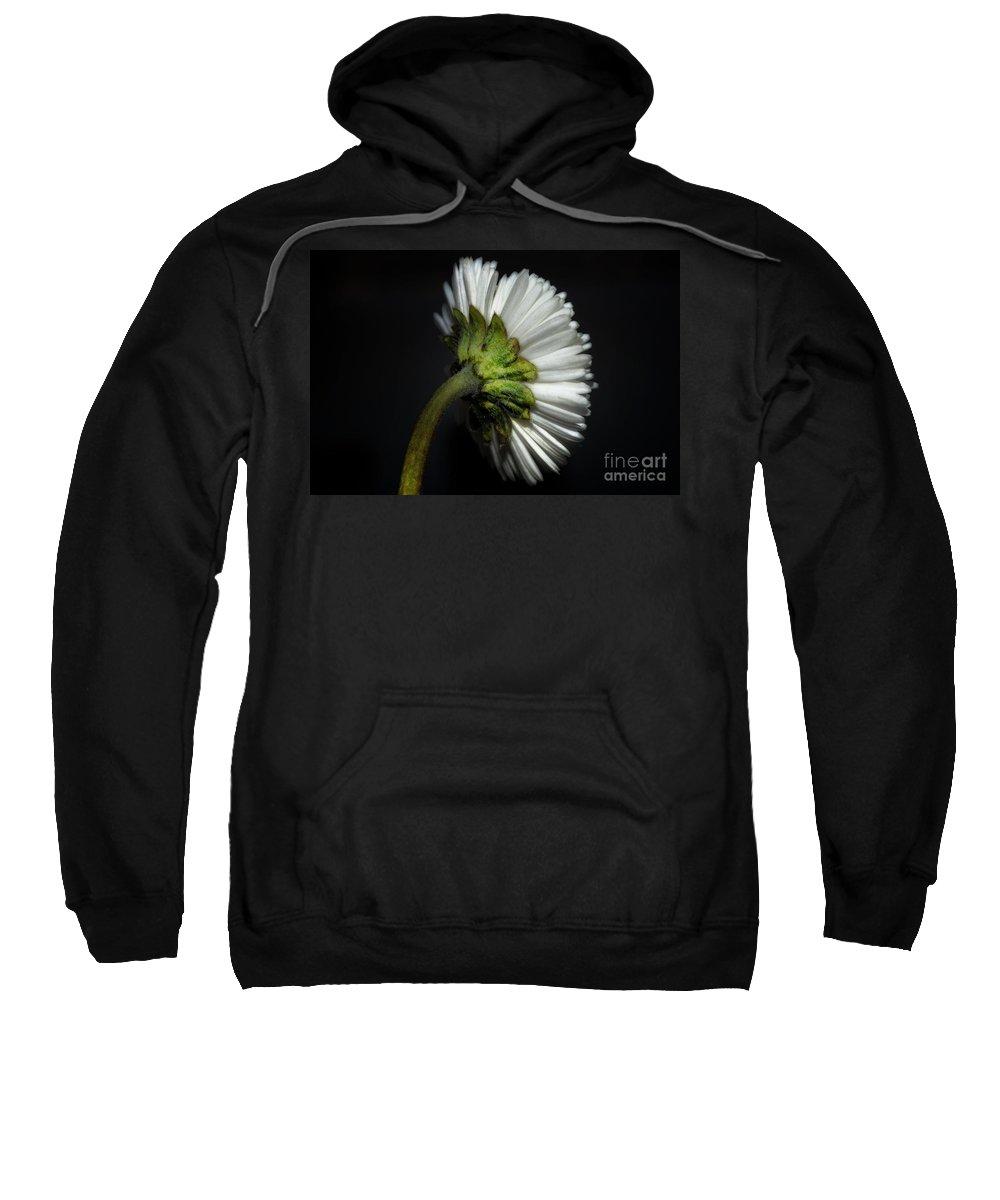 Flower Sweatshirt featuring the photograph Daisy Flower by Mats Silvan