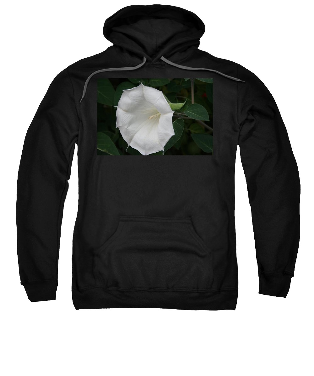 White Datura Sweatshirt featuring the photograph Datura by Christiane Schulze Art And Photography