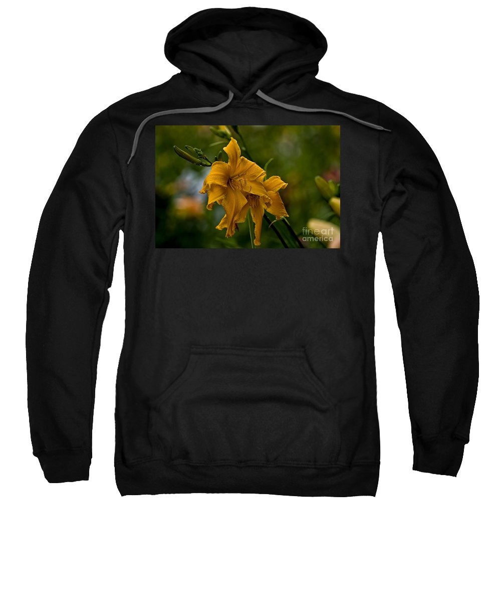 Daylily Sweatshirt featuring the photograph Daylily Picture 474 by World Wildlife Photography