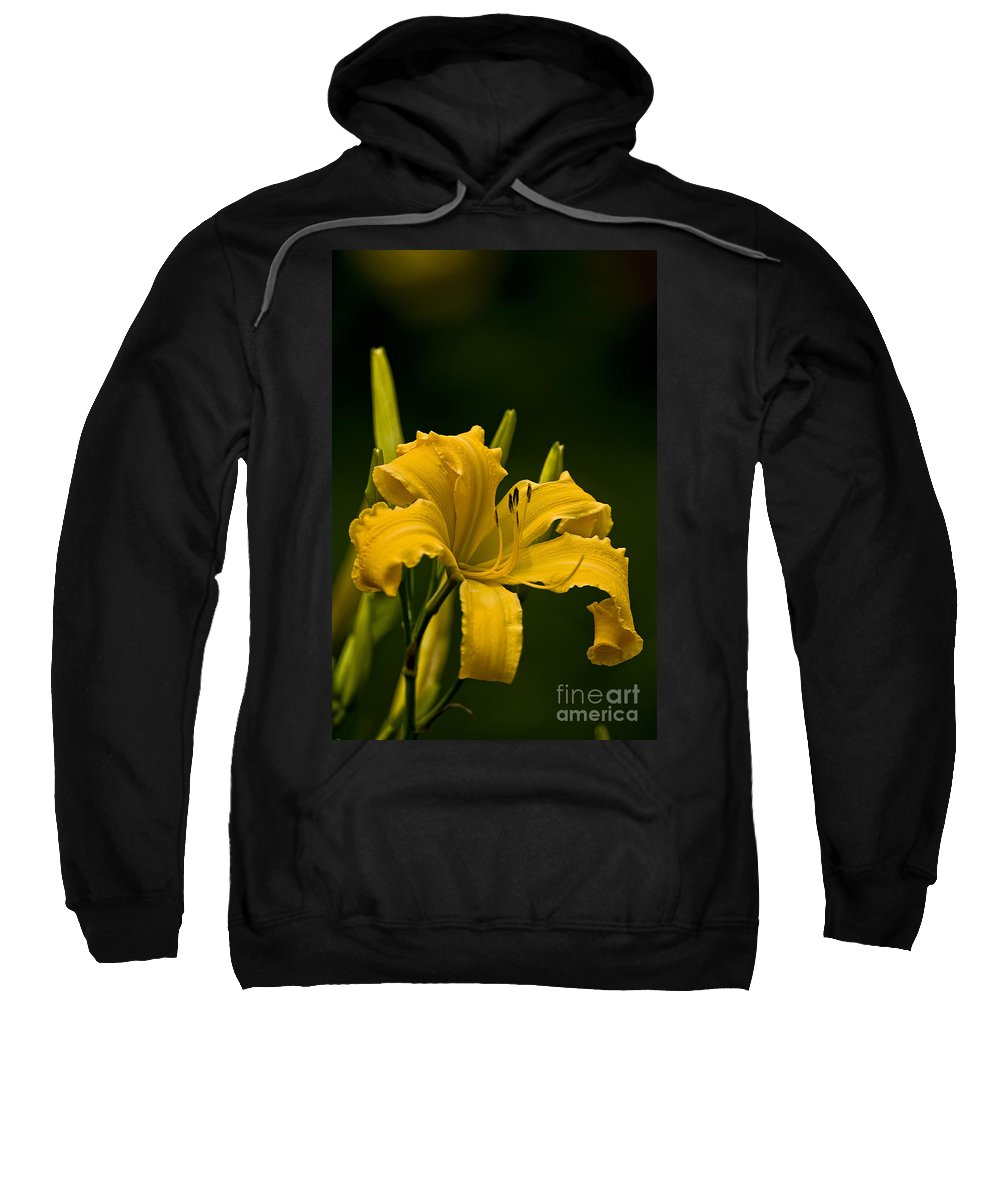 Daylily Sweatshirt featuring the photograph Daylily Picture 539 by World Wildlife Photography