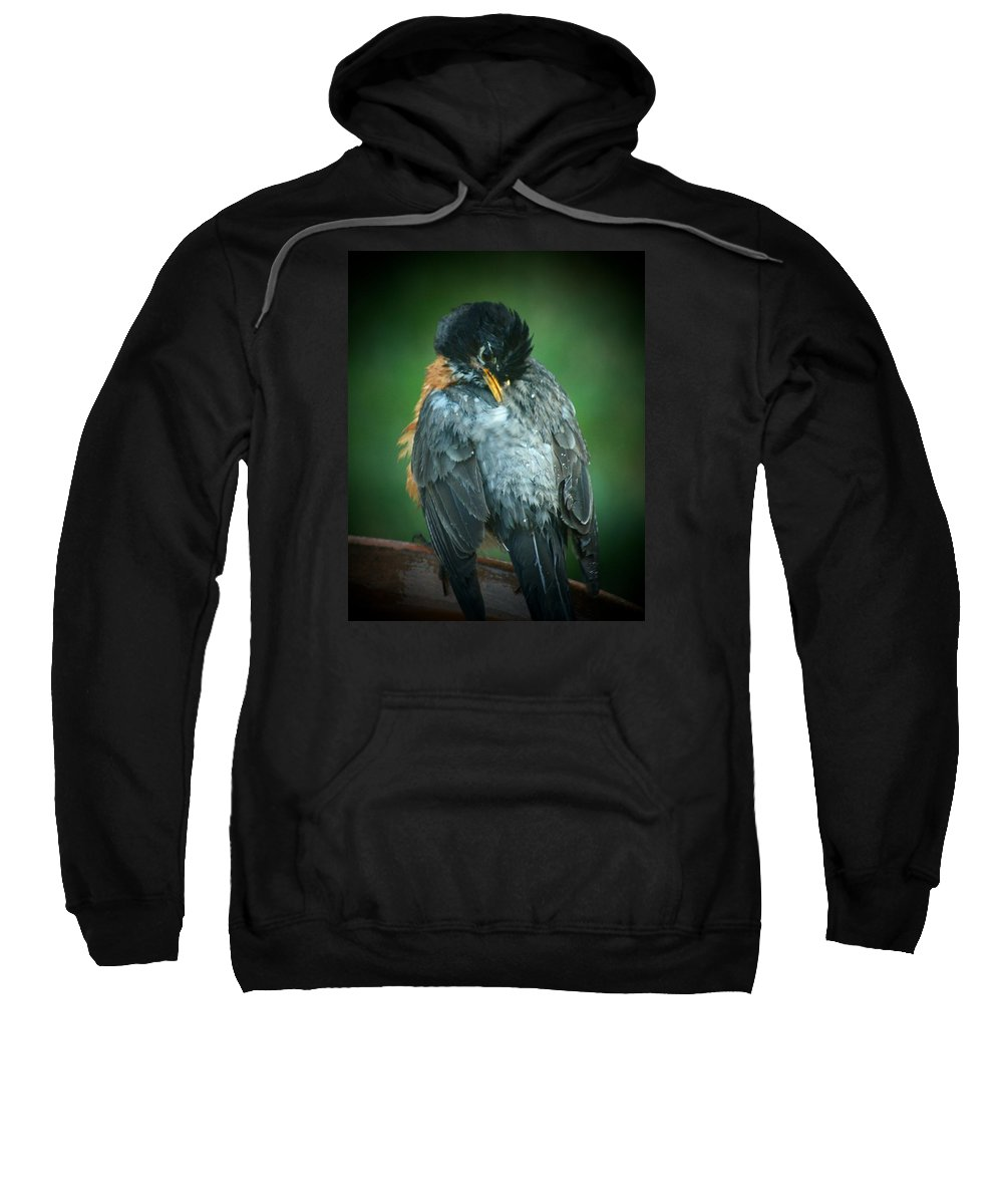 Robin Sweatshirt featuring the photograph Deep Cleaning by Susan McMenamin
