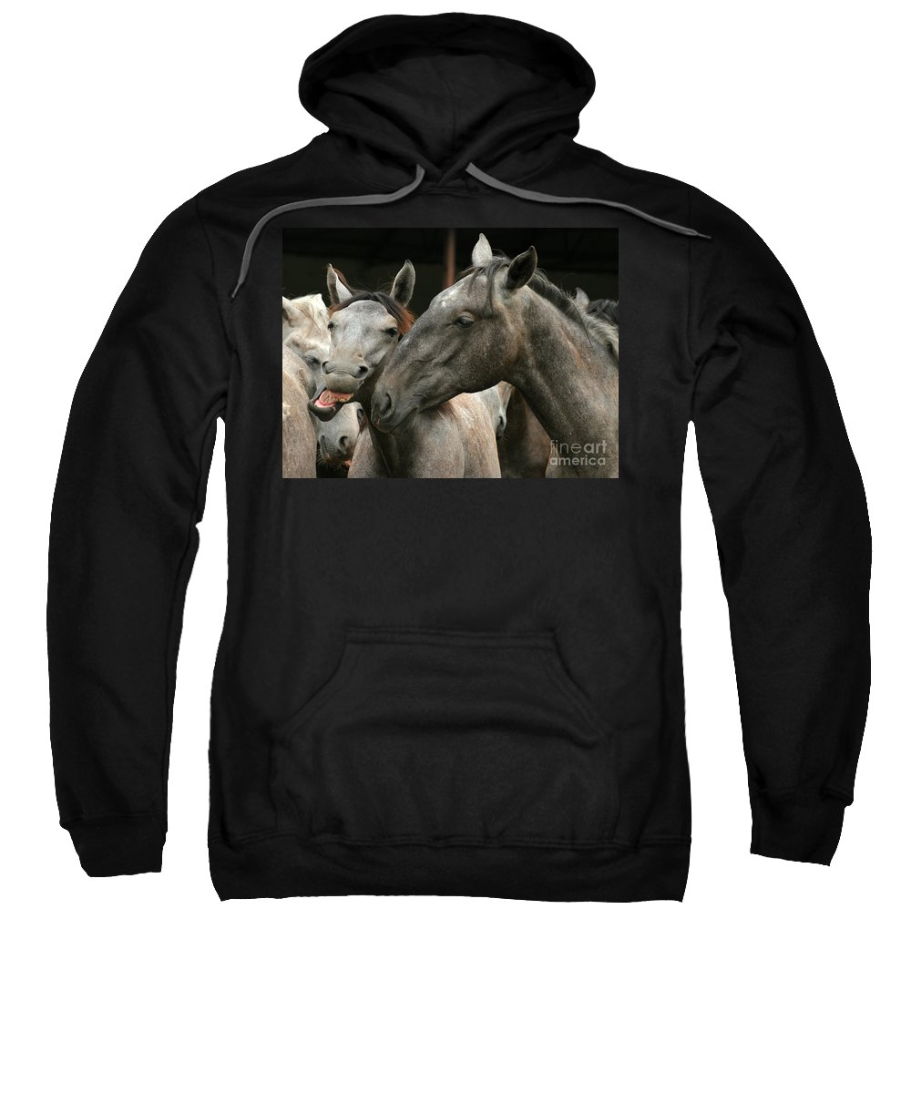 Horse Sweatshirt featuring the photograph Do I Have A Nice Smile by Angel Ciesniarska
