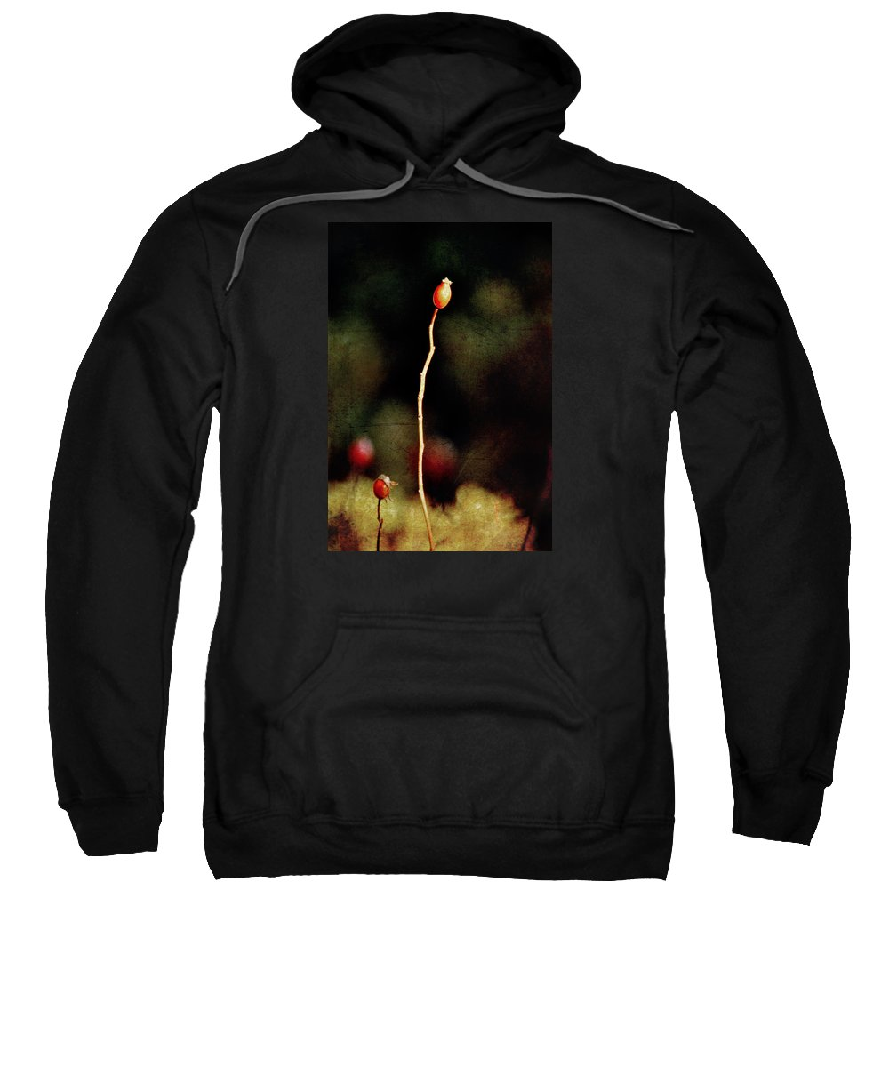 Rosa Canina Sweatshirt featuring the photograph Dog Rose by RicardMN Photography