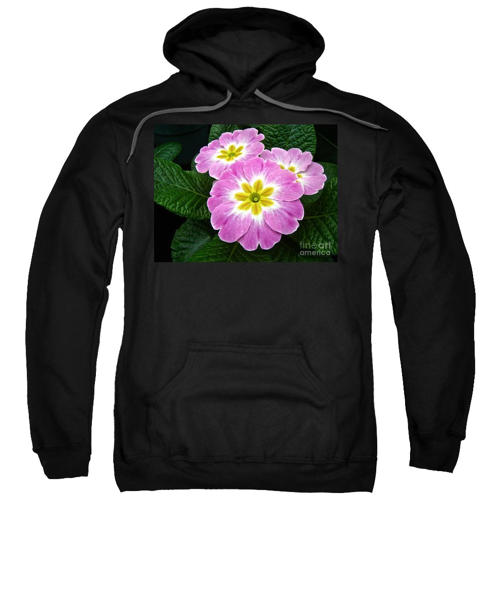 Primrose Sweatshirt featuring the photograph Down On Primrose Lane by Mother Nature