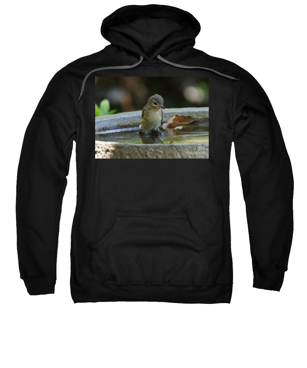 Warbling Vireo Sweatshirt featuring the photograph Drenched by Lori Tordsen