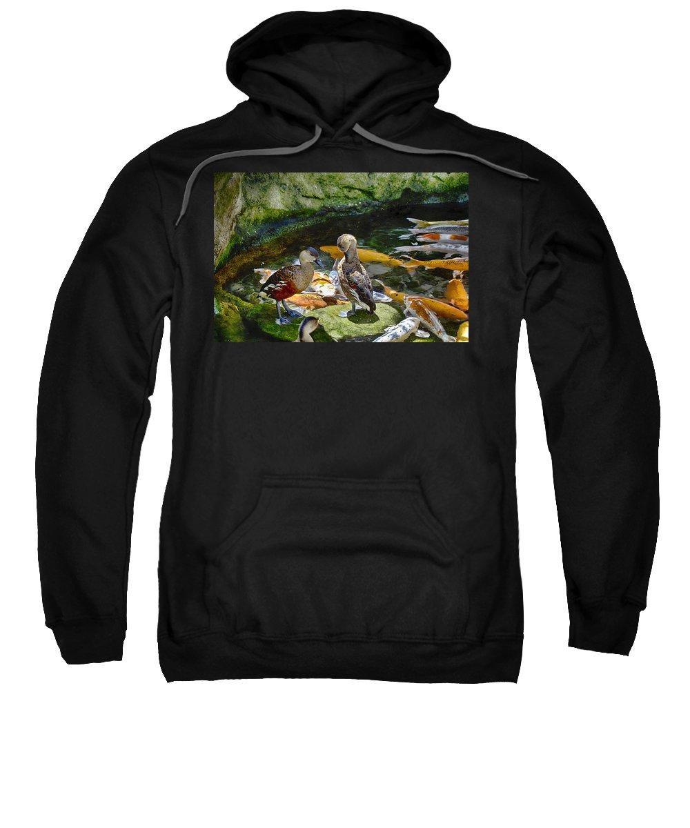 Ducks Sweatshirt featuring the photograph Ducks At The Koi Pond by Douglas Barnard