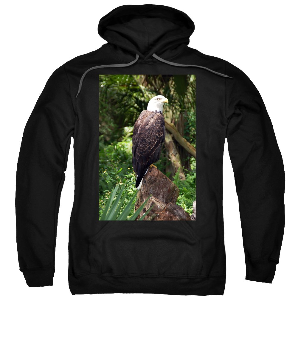 Eagle Sweatshirt featuring the photograph Eagle Portrait by Aimee L Maher ALM GALLERY
