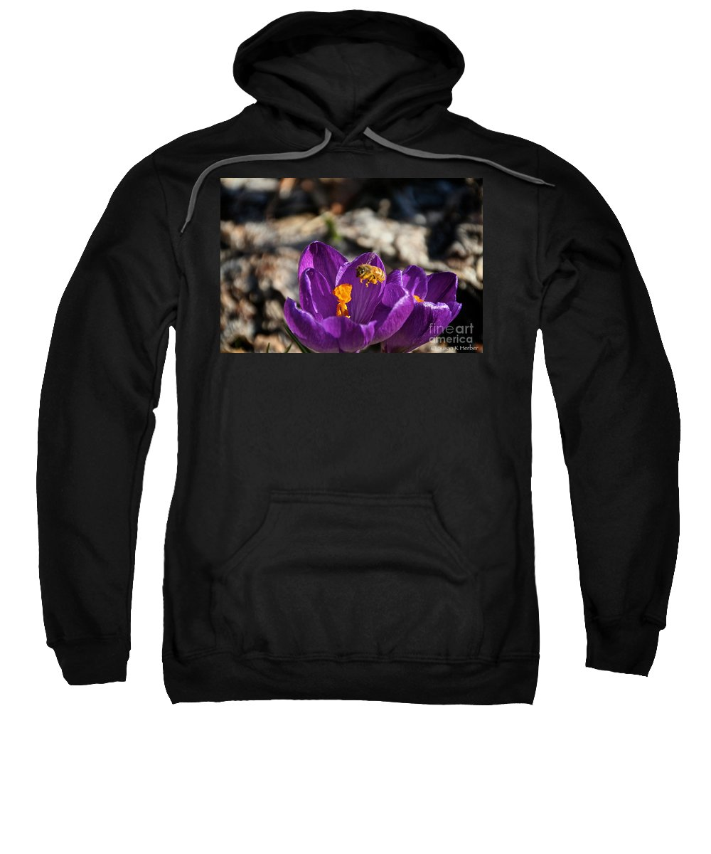 Flower Sweatshirt featuring the photograph Early Bee by Susan Herber
