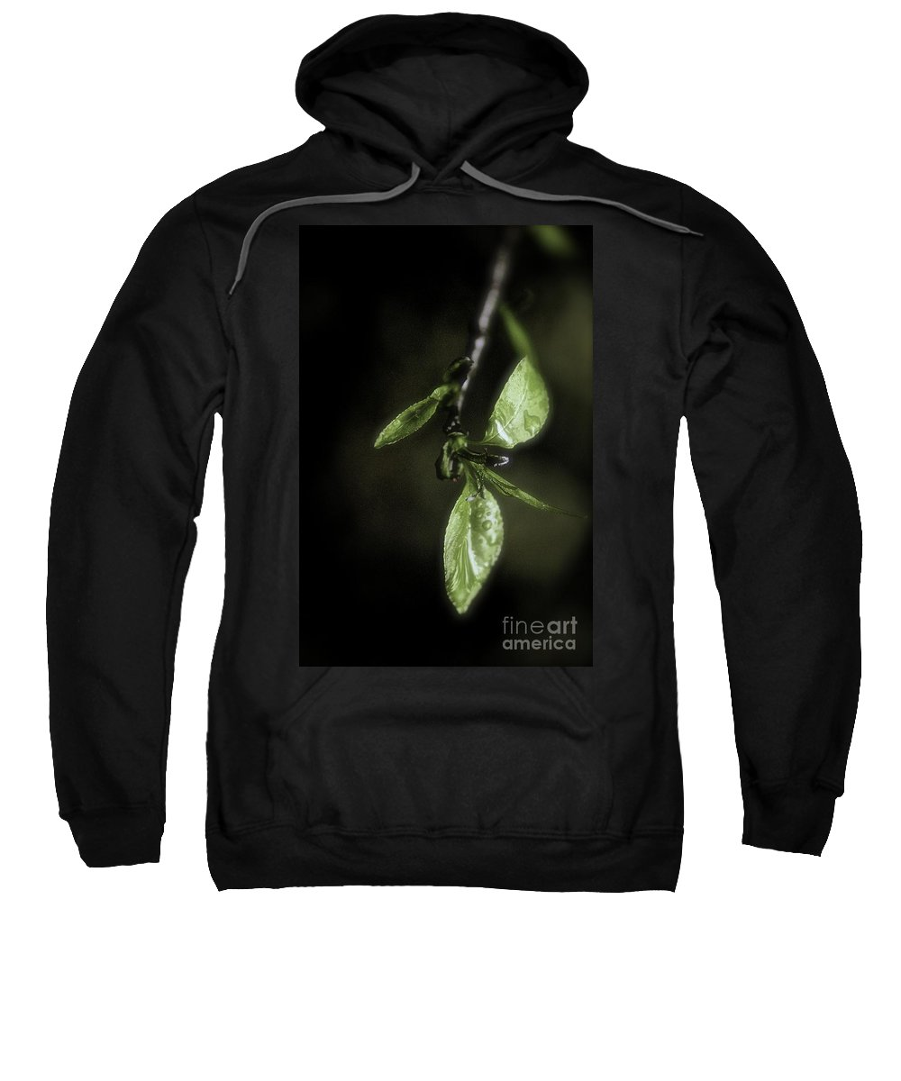 Color Sweatshirt featuring the photograph Early Spring Leaves by Jill Smith