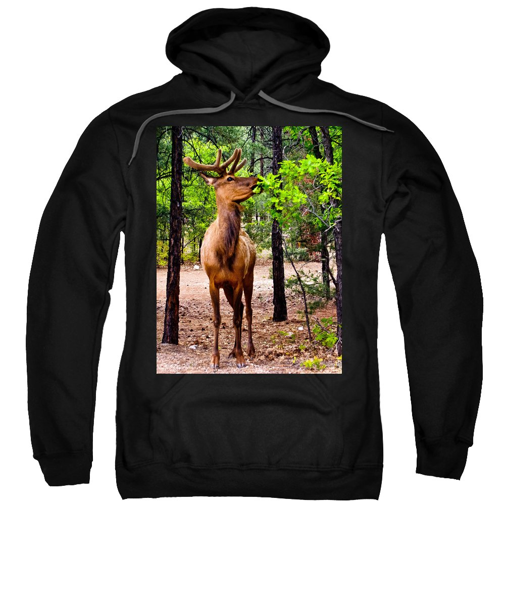Animal Sweatshirt featuring the photograph Elk - Mather Grand Canyon by Bob and Nadine Johnston