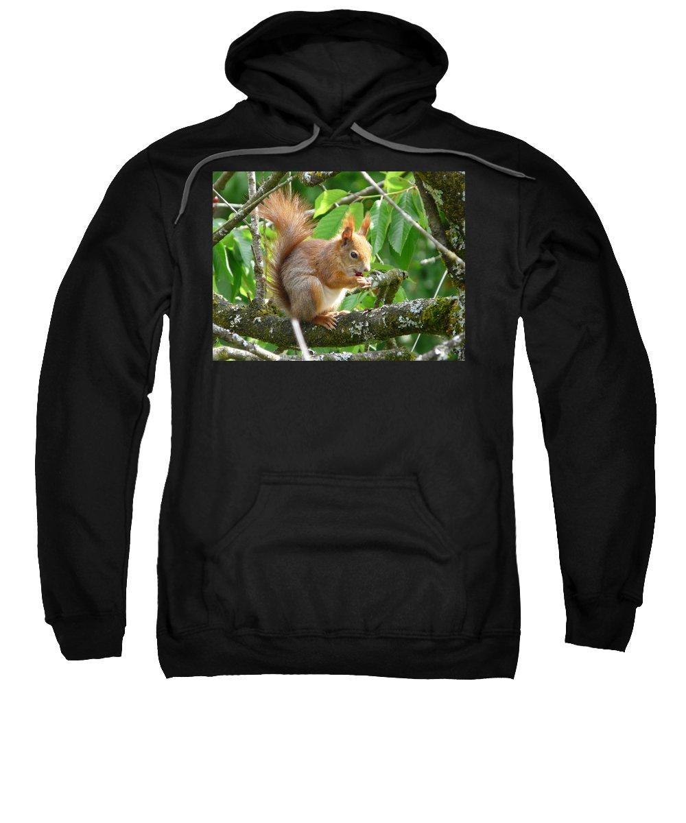 Squirrel Sweatshirt featuring the photograph Enjoying Cherries by Valerie Ornstein