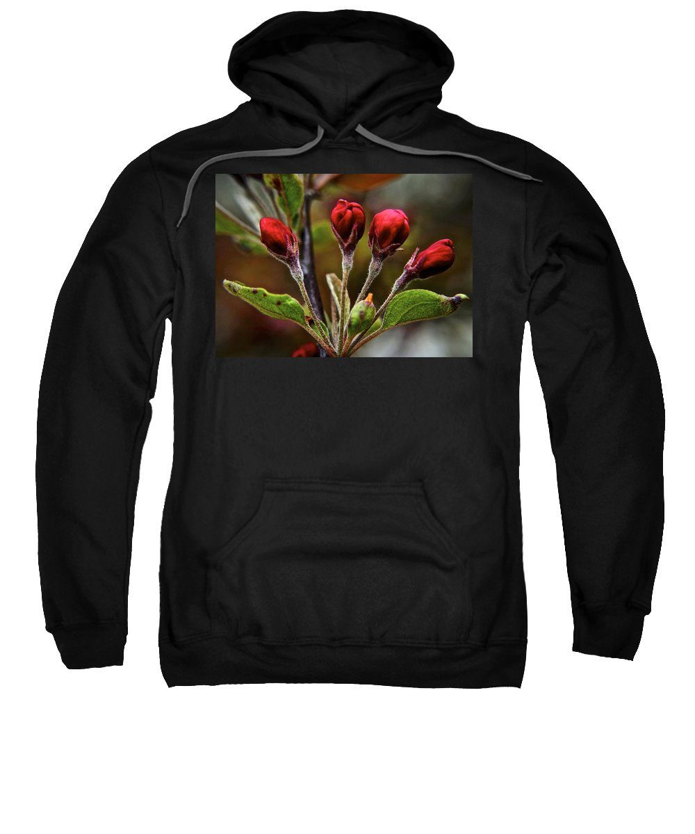 Evening Sweatshirt featuring the photograph Evening Beauty by Frozen in Time Fine Art Photography