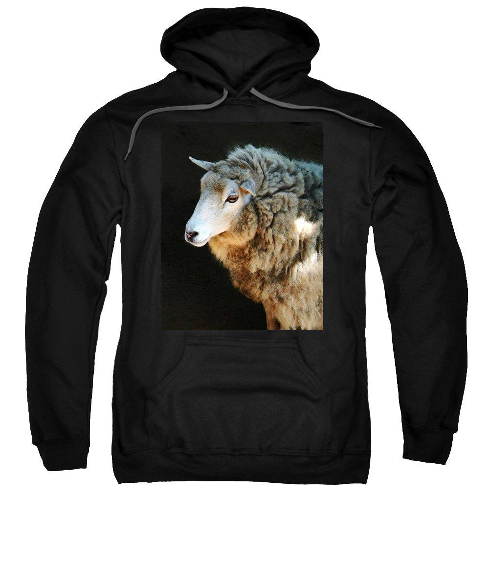 Ewe Are So Beautiful Sweatshirt featuring the photograph Ewe Are So Beautiful by Ellen Henneke