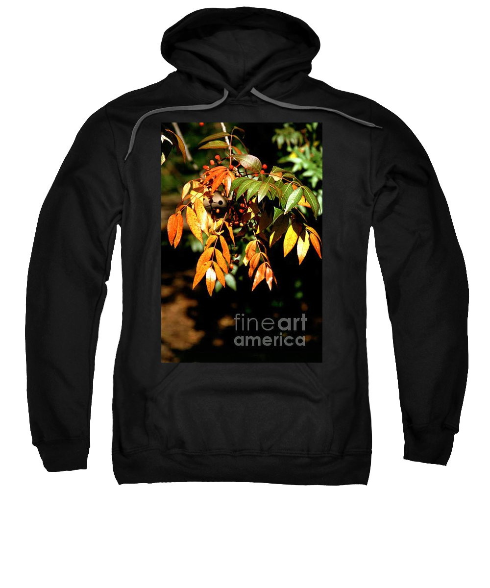 Fall Color Sweatshirt featuring the photograph Fall Leaves by Kathy McClure