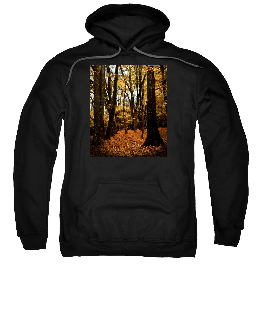 Bidwell Park Sweatshirt featuring the photograph Fall Scene In Bidwell Park by Robert Woodward