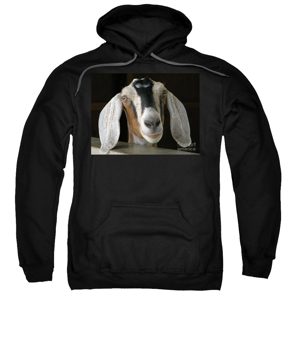 Goat Sweatshirt featuring the photograph Farm Favorite by Ann Horn