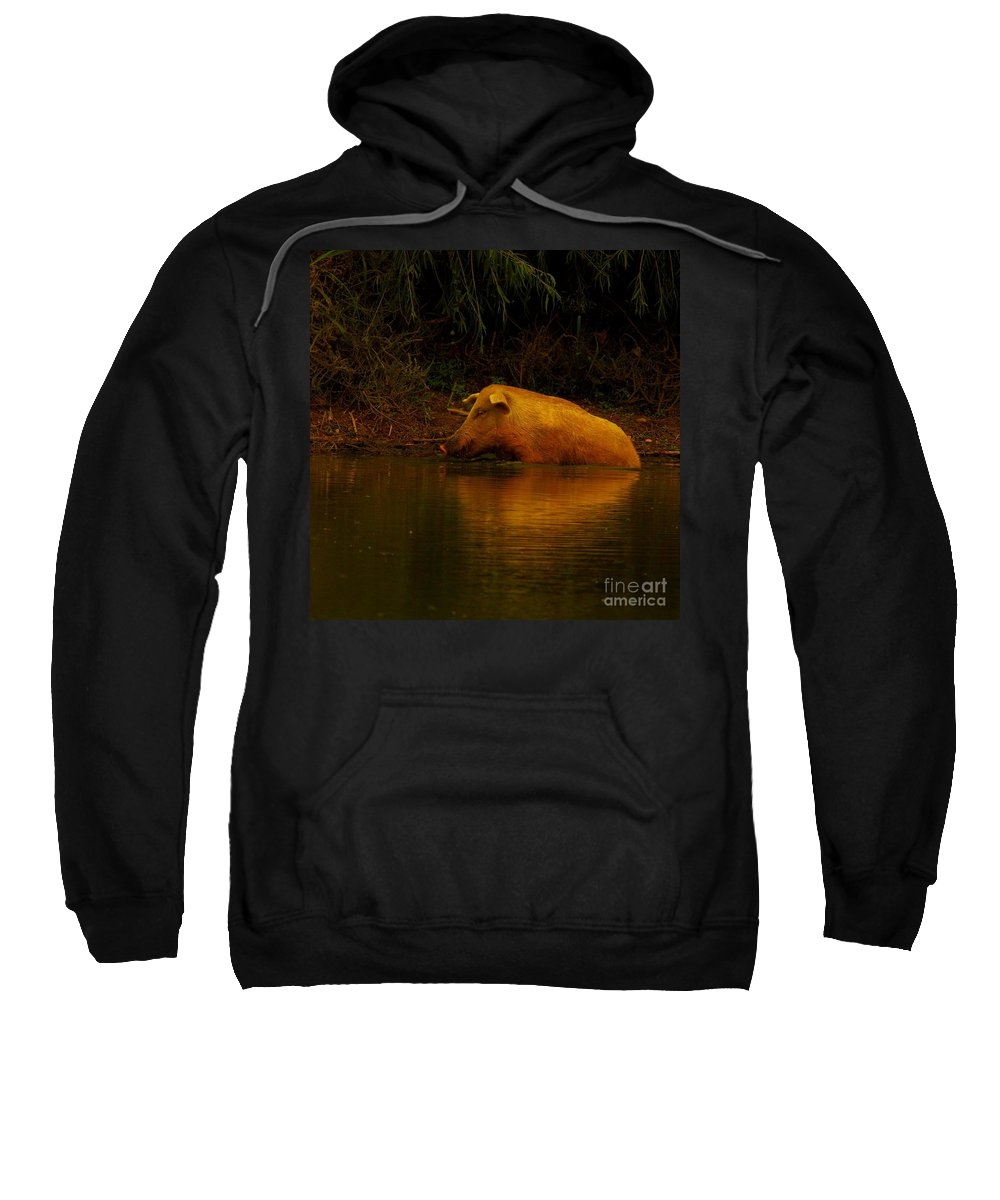 Nature Sweatshirt featuring the photograph Ferrell Hog At Sunrise by Robert Frederick