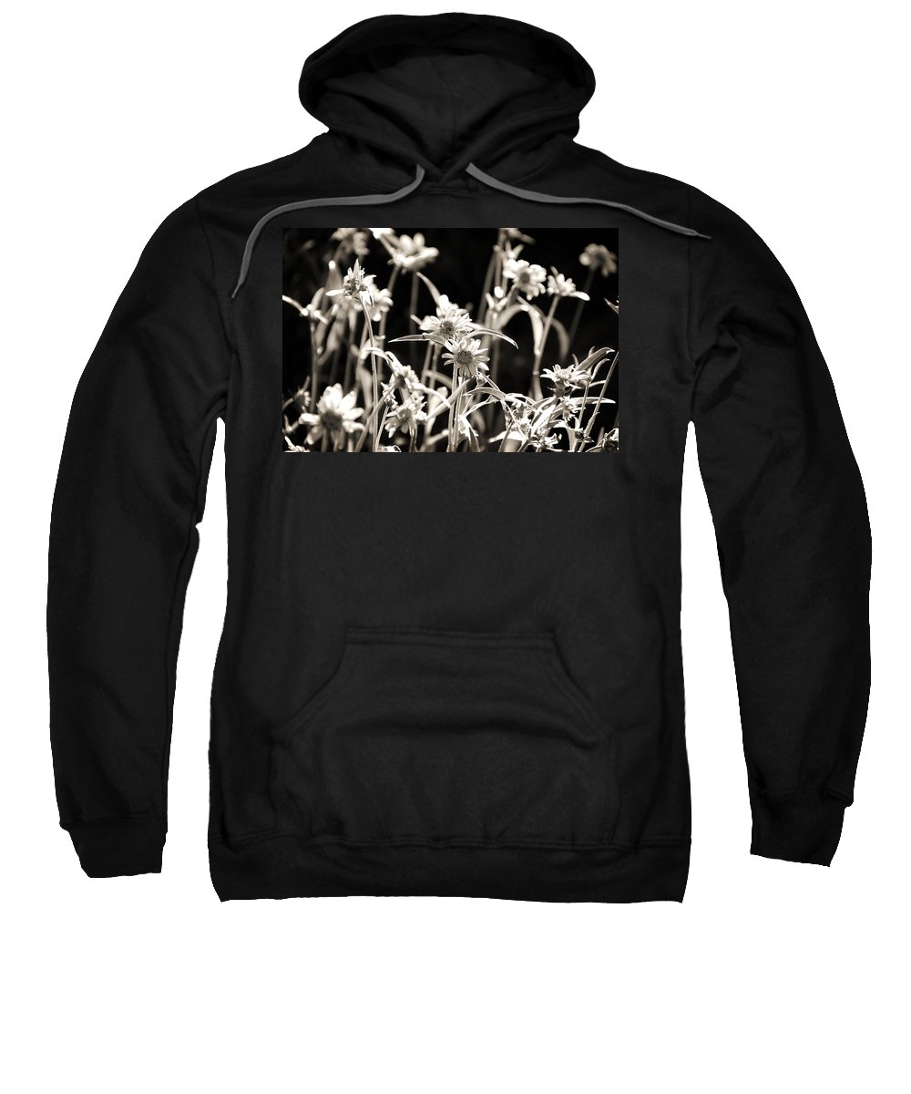 Sepia Sweatshirt featuring the photograph Field Of Daisies by Shawn McMillan