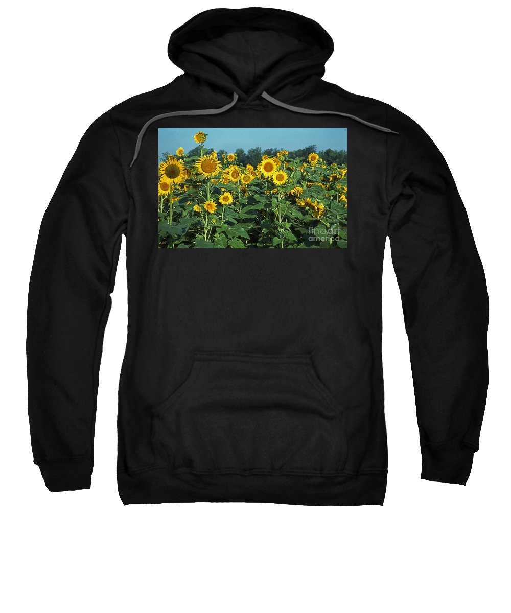 Pictures Of Flowers Sweatshirt featuring the photograph Field Of Smiley Faces by Skip Willits
