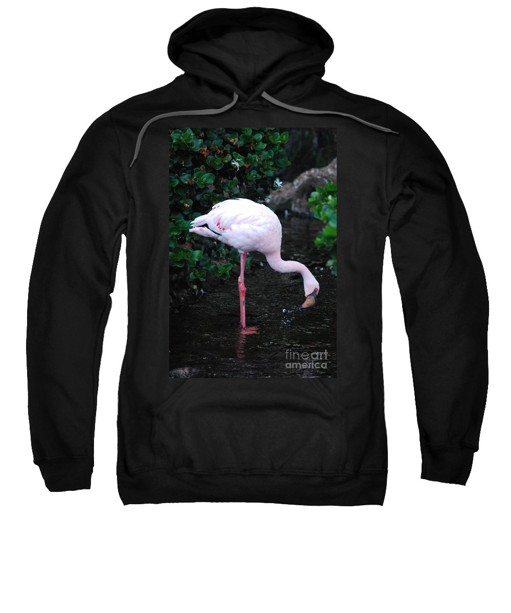 Flamingo Sweatshirt featuring the photograph Flamingo Drinking Water by DejaVu Designs