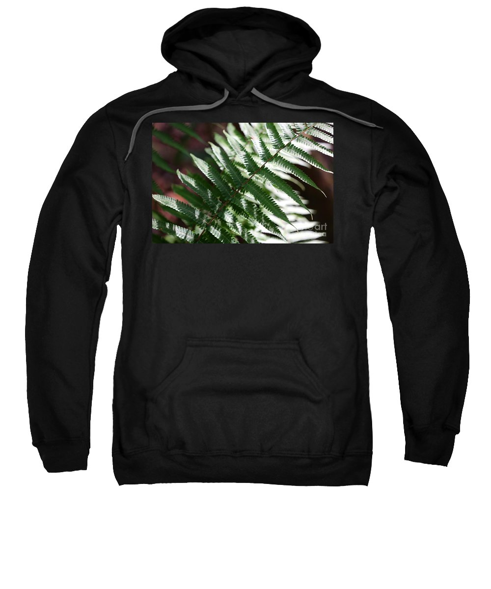 Fern Sweatshirt featuring the photograph Florida Fern by Carol Groenen