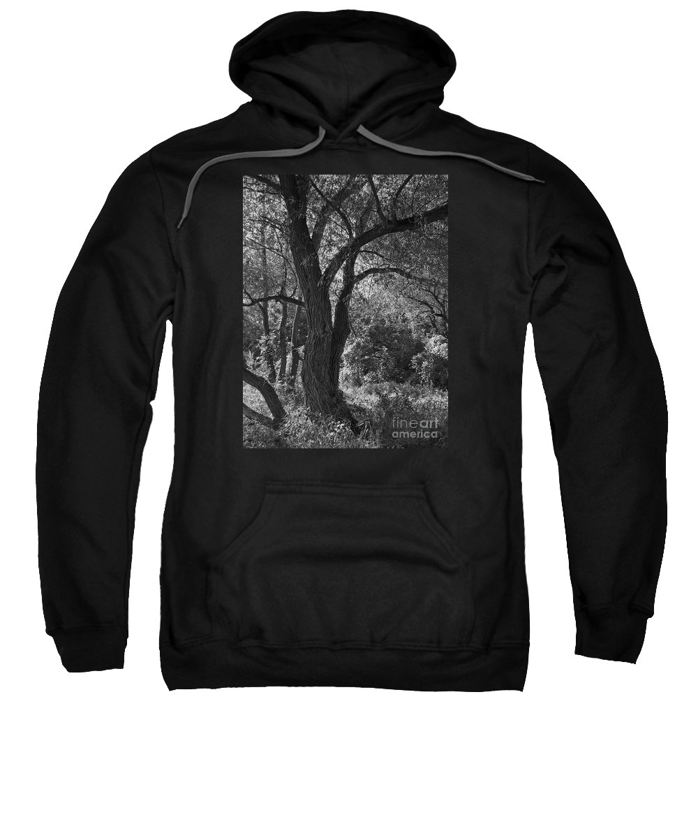Forest Sweatshirt featuring the photograph Forest Light by Ann Horn