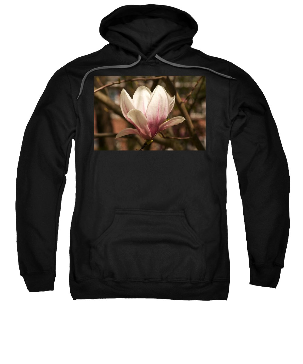 Magnolia Sweatshirt featuring the photograph Found On A Walk by Allan Morrison