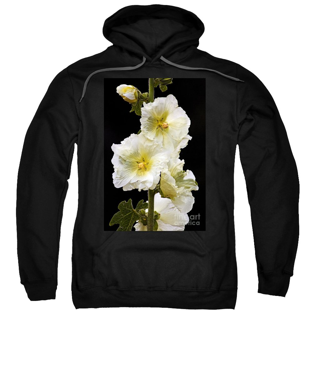Hollyhock Sweatshirt featuring the photograph Fragile Flower by Joe Geraci