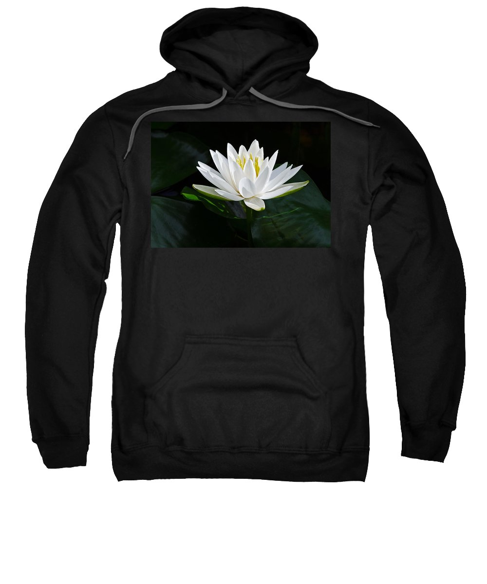 Fragrant Water-lily Sweatshirt featuring the photograph Fragrant Water-lily by Stephen Gingold