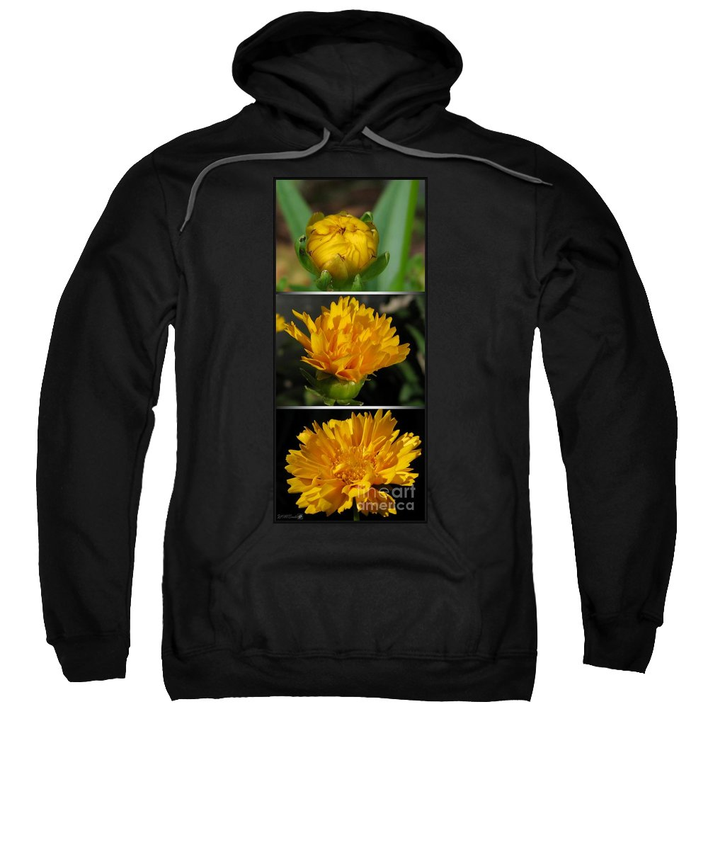 Coreopsis Sweatshirt featuring the photograph From Bud To Bloom - Coreopsis Named Early Sunrise by J McCombie