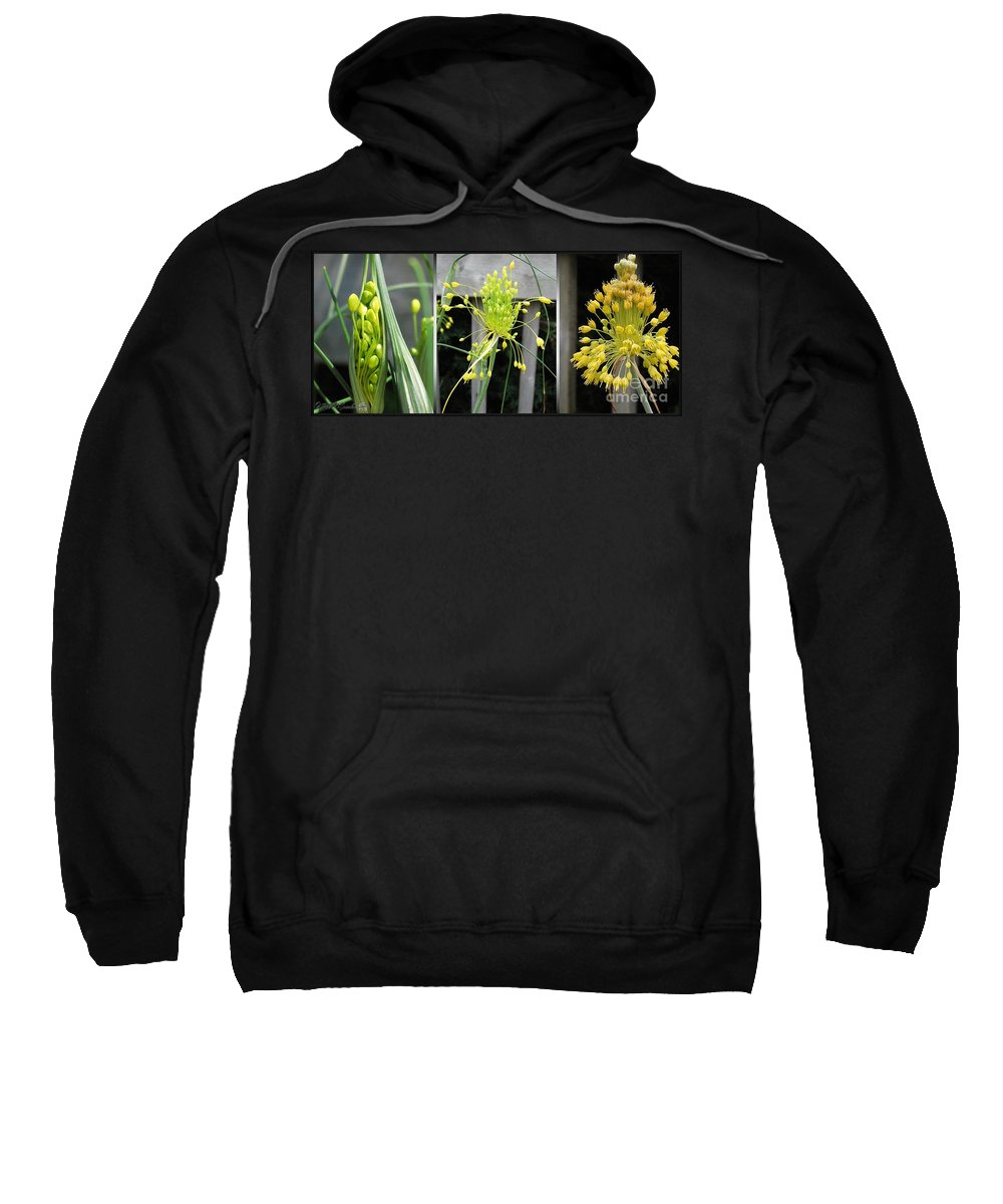 Mccombie Sweatshirt featuring the painting From Bud To Bloom - Fireworks Allium by J McCombie