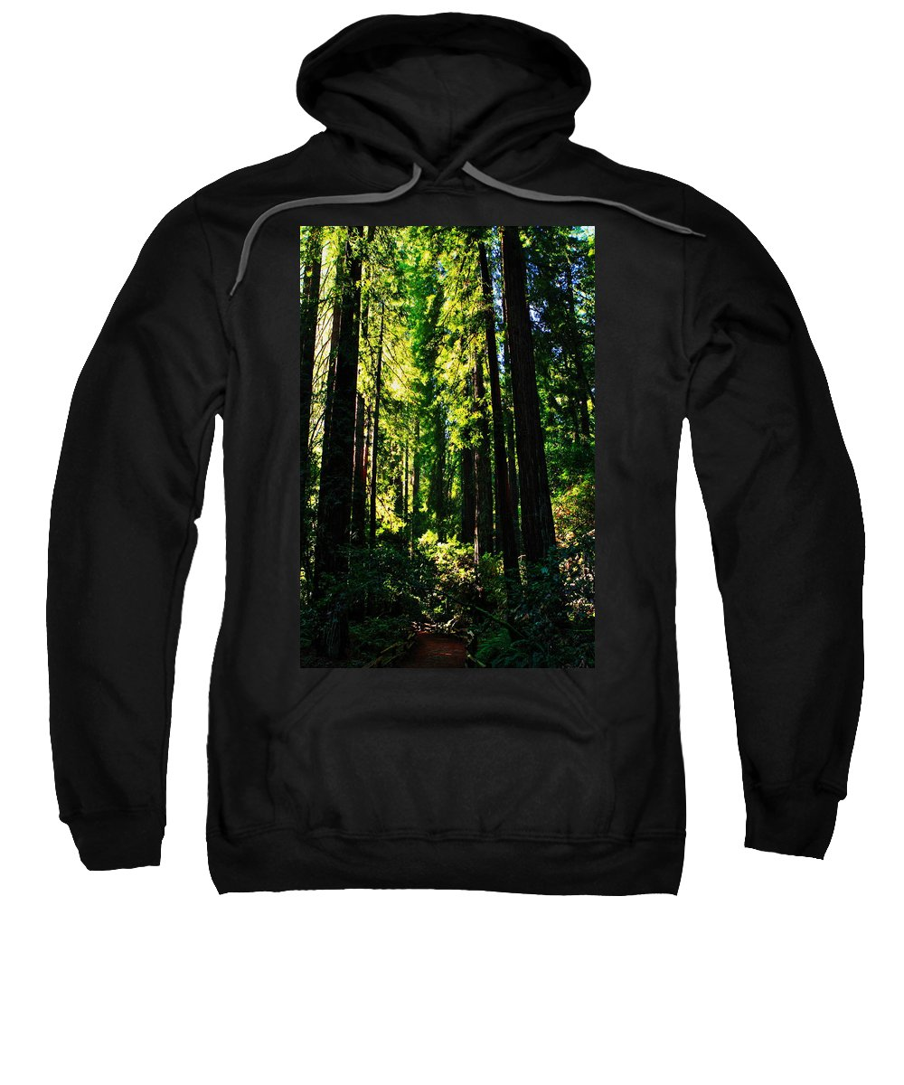 Usa Sweatshirt featuring the photograph Giant Redwood Forest by Aidan Moran