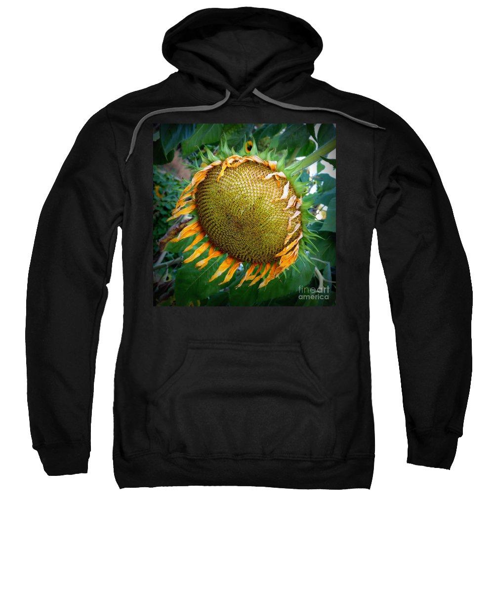 Sunflower Sweatshirt featuring the photograph Giant Sunflower Drama by Carol Groenen