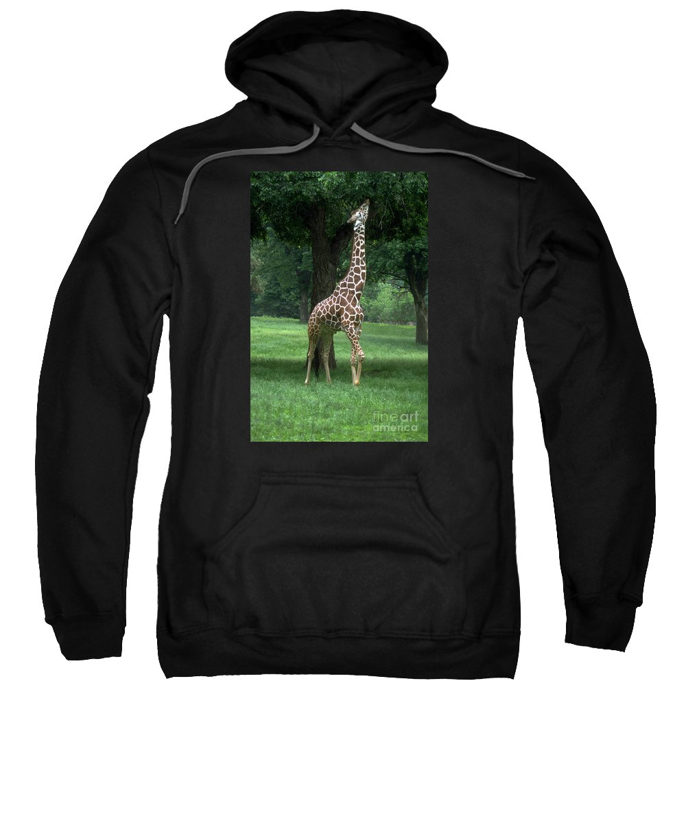 Giraffe Sweatshirt featuring the photograph Giraffe by Gary Gingrich Galleries