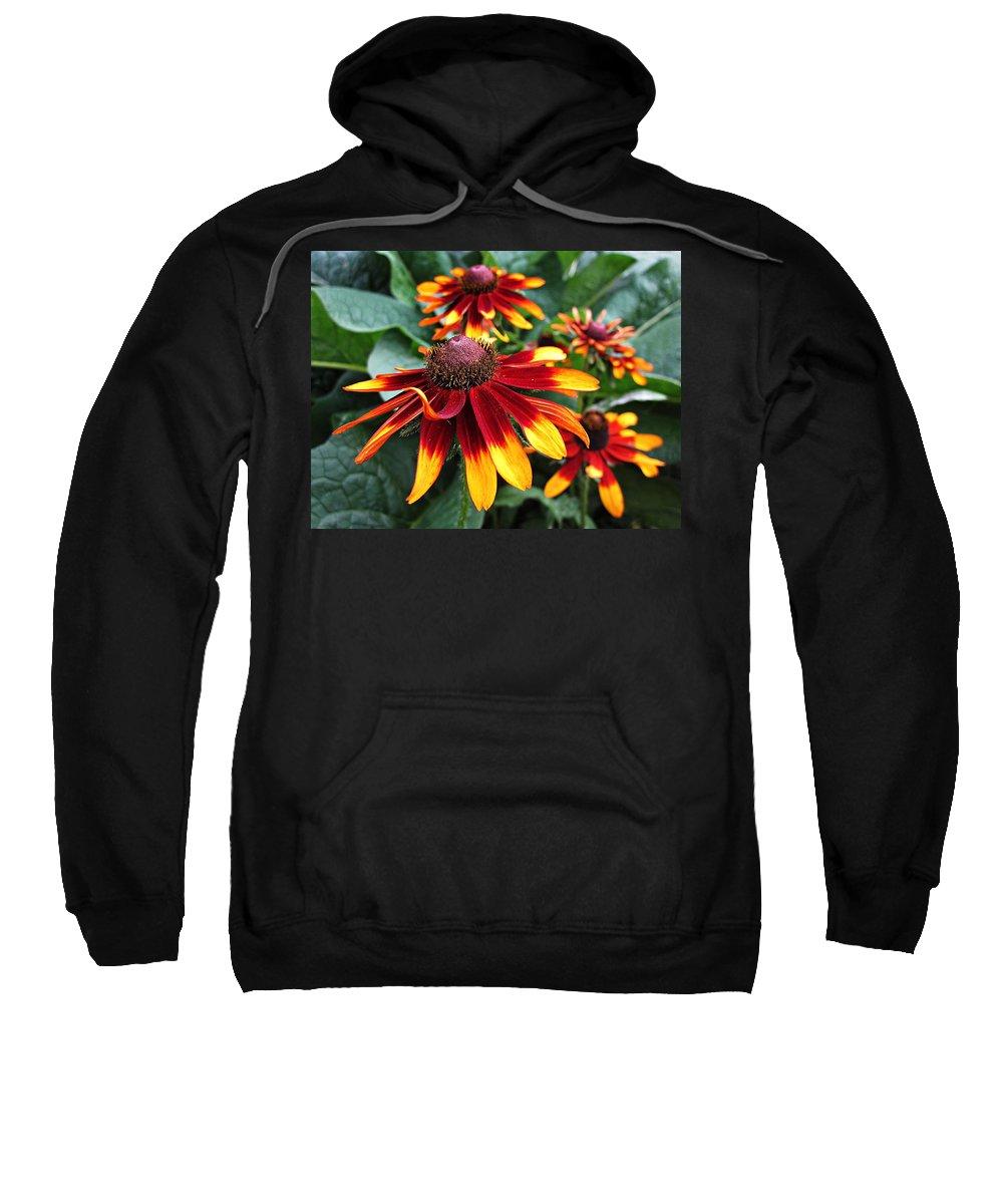 Rudbeckia Sweatshirt featuring the photograph Gloriosa Daisy Waving by MTBobbins Photography