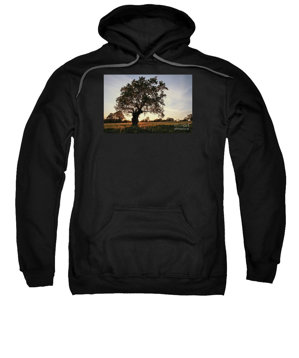 Clare Bambers Sweatshirt featuring the photograph Goddess Tree 2 by Clare Bambers