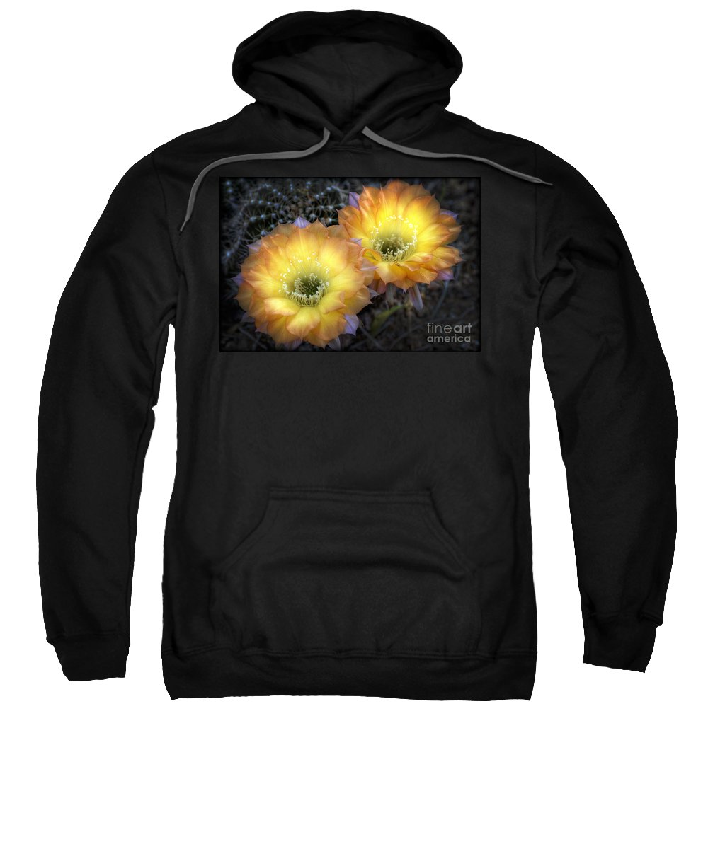 Arizona Sweatshirt featuring the photograph Golden Cactus Flowers by Saija Lehtonen