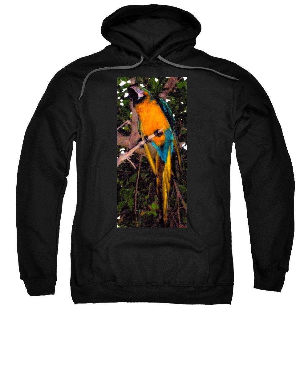 Animal Sweatshirt featuring the photograph Gorgeous Golden by Glenn Aker