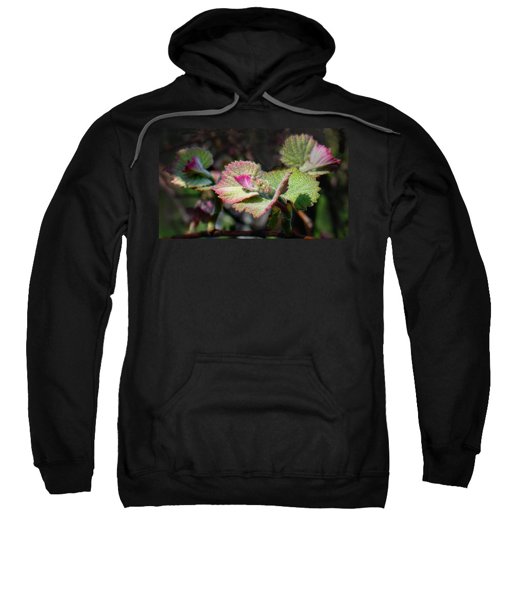 Grape Leaves Sweatshirt featuring the photograph Grape Leaves In Spring by Steve Karol
