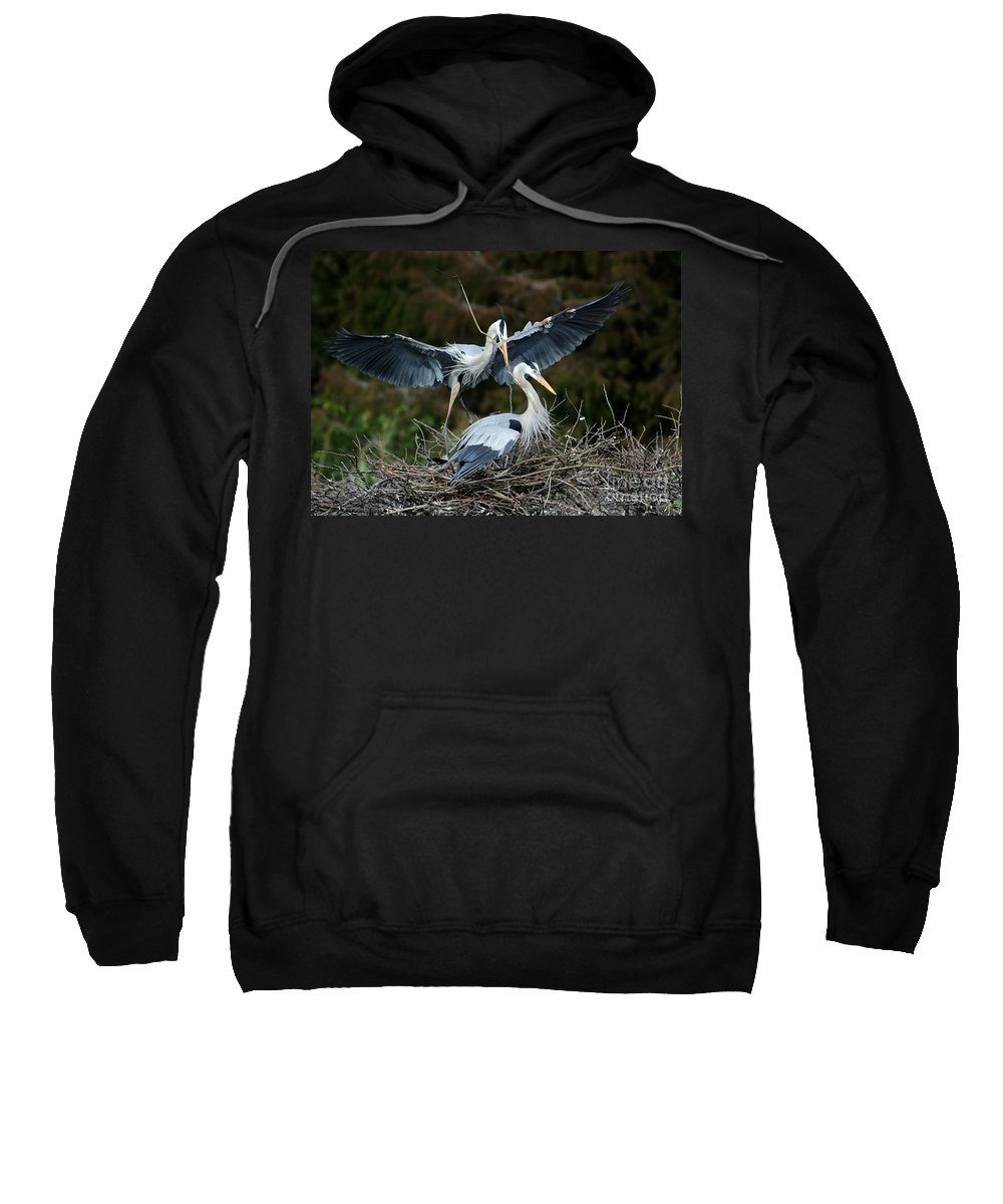 Heron Sweatshirt featuring the photograph Great Blue Herons Nesting by Sabrina L Ryan