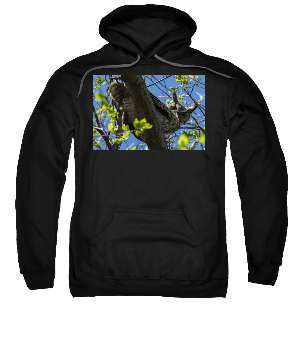 Bird Sweatshirt featuring the photograph Great Horned Owl 5 by Bob Christopher