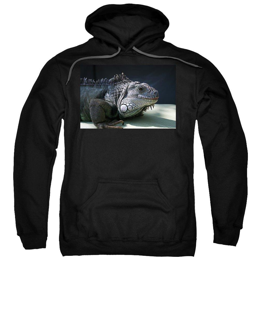 Green Iguana Sweatshirt featuring the photograph Green Iguana 1 by Ellen Henneke