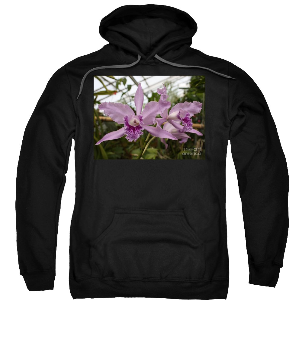 Flower Sweatshirt featuring the photograph Greenhouse Ruffly Orchids by Carol Groenen
