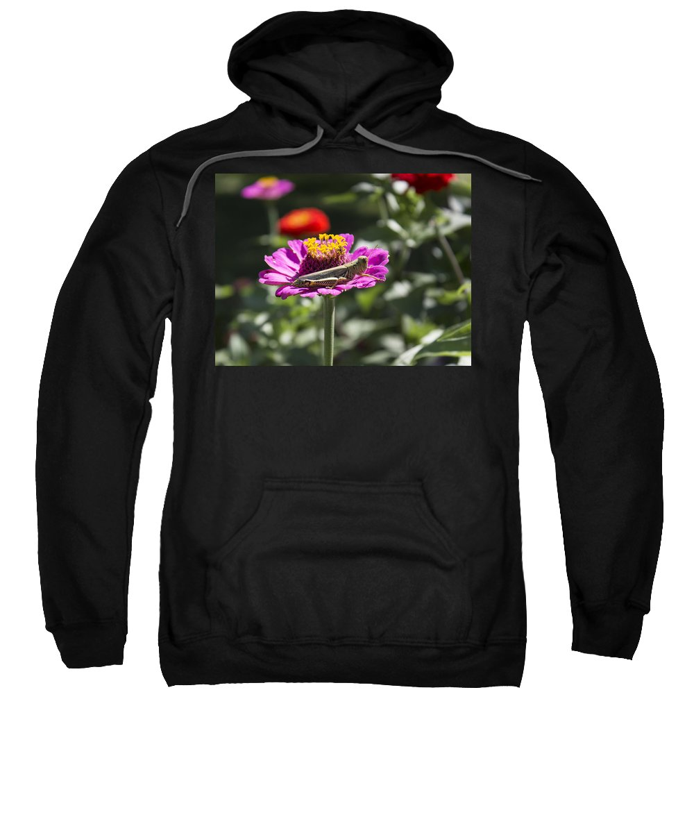 Grasshopper Sweatshirt featuring the photograph Greeting Grasshopper by Bailey Barry