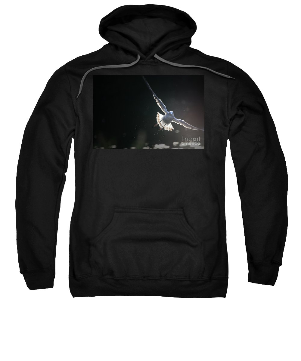 Seagull Sweatshirt featuring the photograph Gull In Flight by Karol Livote