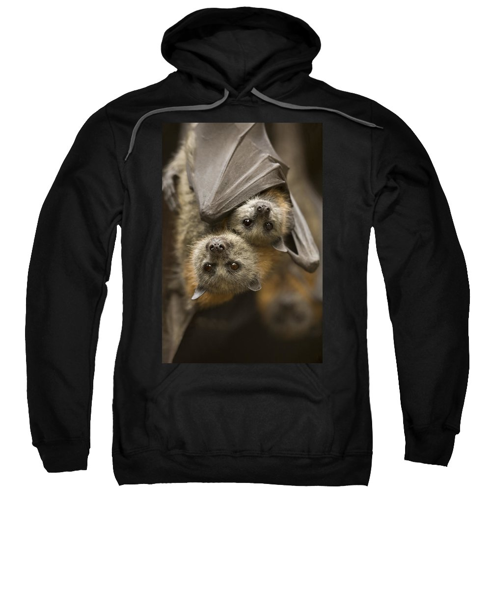 Bats Sweatshirt featuring the photograph Hang In There by Mike Dawson