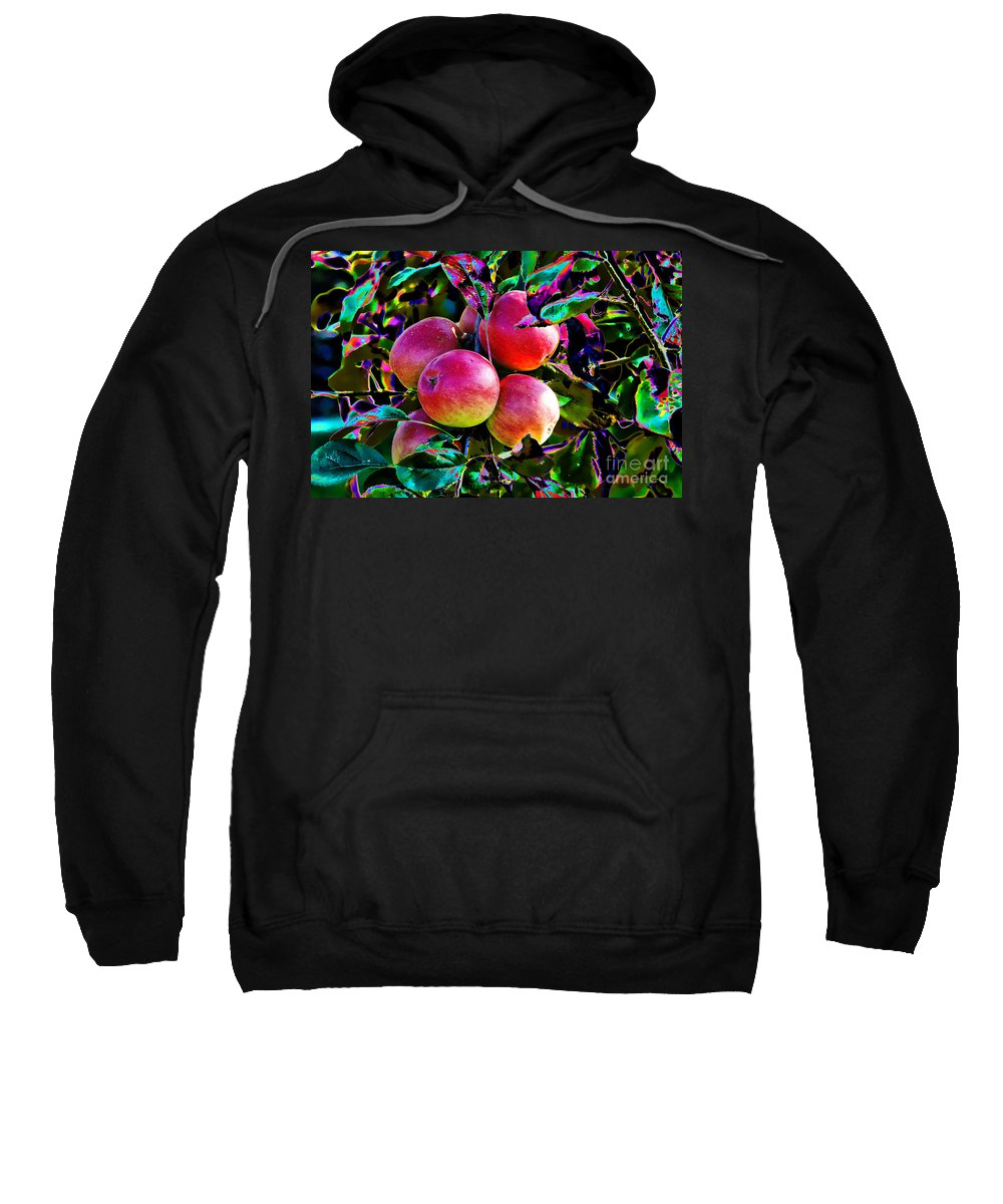 Apples Sweatshirt featuring the photograph Harvesting Apples by Mariola Bitner