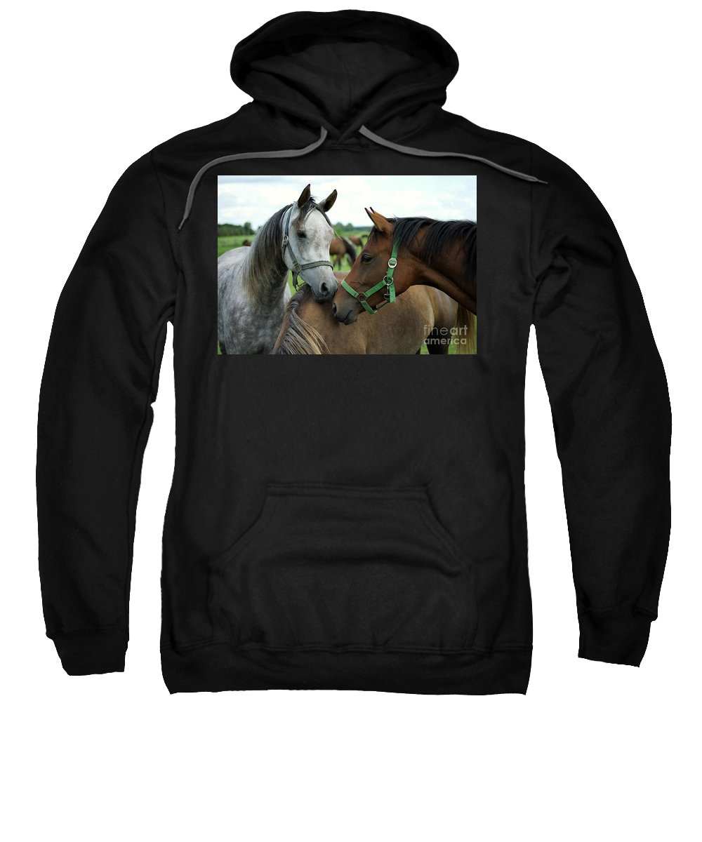Horse Sweatshirt featuring the photograph Having A Chat by Angel Ciesniarska