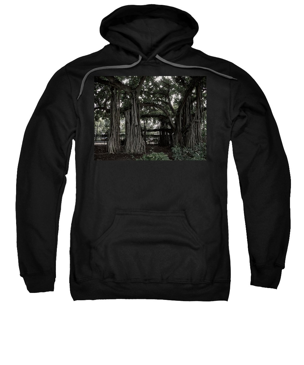 Banyan Sweatshirt featuring the photograph Hawaiian Banyan Trees by Daniel Hagerman