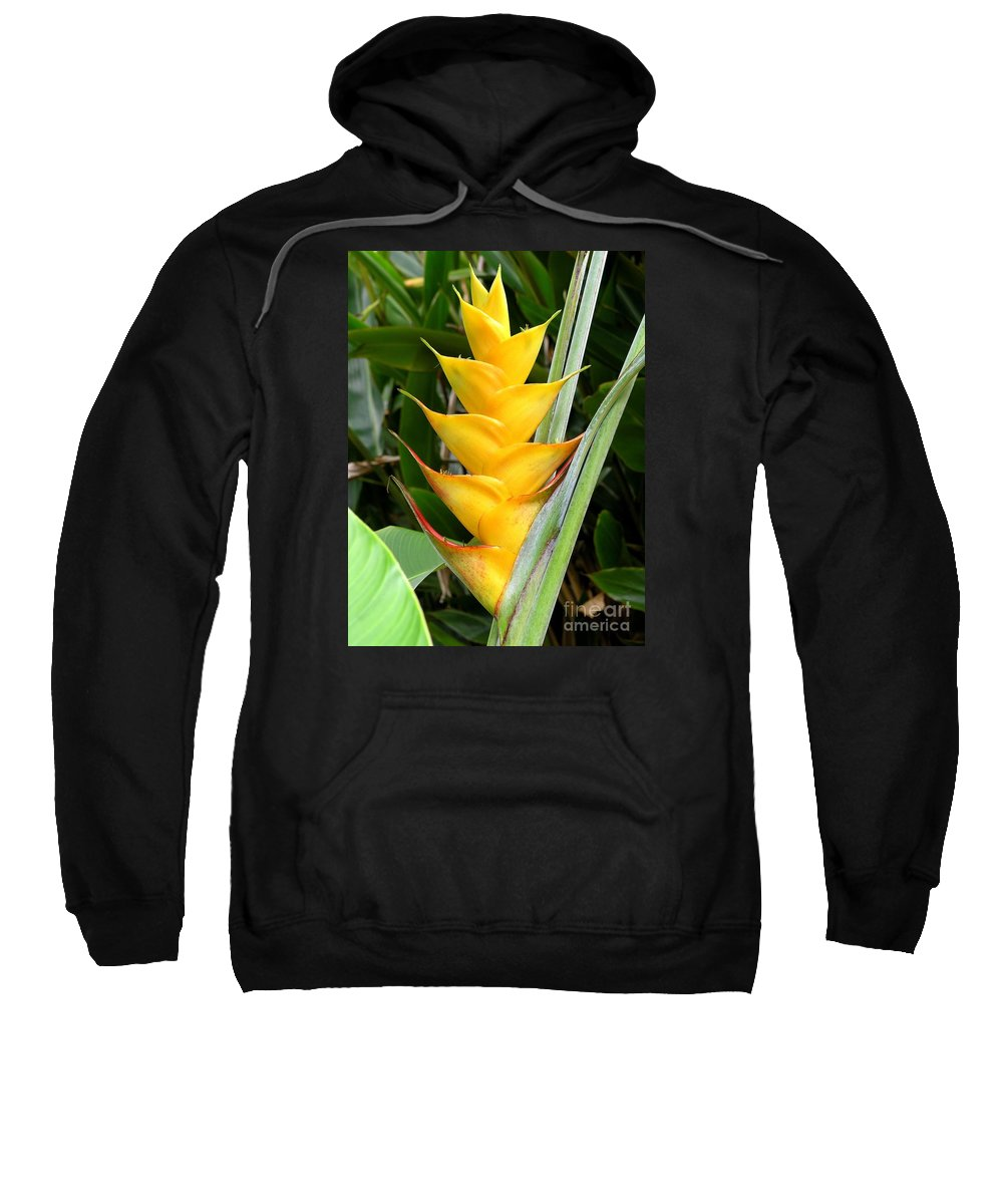 Heliconia Caribea Sweatshirt featuring the photograph Heliconia Caribea by Mary Deal
